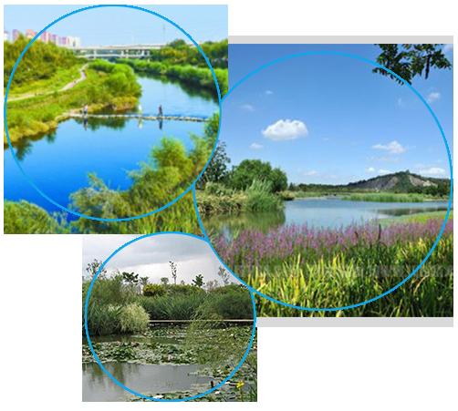 人工湿地技术